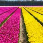 aerial photography spring flowers